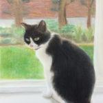 パステル画『猫-1』