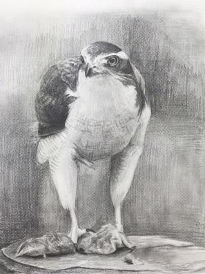 鉛筆デッサン『鷹』