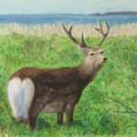 水彩画『草原の鹿』