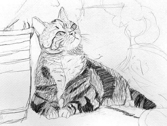 ジュニアクラス会員作品 鉛筆デッサン『猫』
